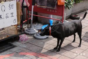 雙城街夜市にいる黒い犬