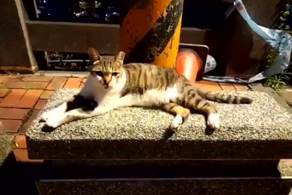九份(九分)の猫